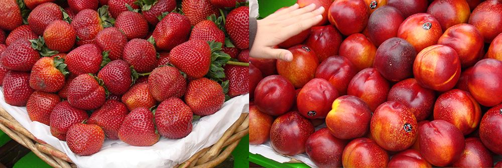 pier39 fruits