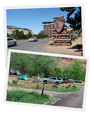 Watchman Campground1